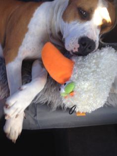 Alita in the car with her new toy