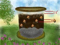 Pesquisa Formas de plantar tulipas em vasos. Vistas 15839.