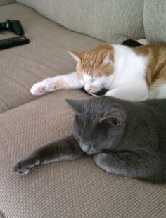 "funny-2-cats-napping (=^.^=) Thanks, Pinterest Pinners, for stopping by, viewing, re-pinning, & following my boards.  Have a beautiful day! ❁❁❁ and ""Feel free to share on Pinterest""✮✮"" #catsandme #cats"