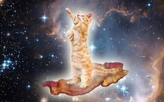 Cat + Bacon + Space = Epic Caturday  A cat surfing through space on bacon!