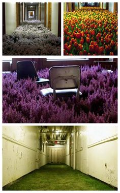 Bloom by Anna Schuleit - thousands of flowers installed in an abandoned mental asylum.