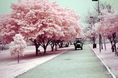 Looks like a field of cotton candy =)