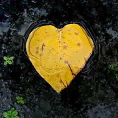 Yellow Black Leaf Heart Valentine Nature Lover 8 x by TerraVision,