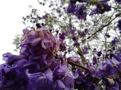 Púrpura de invierno