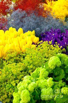 flower scape dana kern