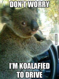 I am koala and I know it!