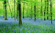 Part travelogue, part folklore, Sara Maitland's journey into 12 British forests is infectiously enjoyable, writes Olivia Laing