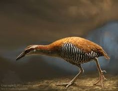 Image result for extinct in the wild