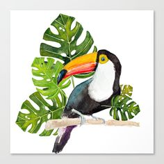 Watercolor toucan Art Print by craftberrybush Watercolor Bird, Watercolor Animals, Watercolor Illustration, Watercolor Paintings, Cool Car Drawings, Animal Drawings, Africa Art, Mural Wall Art, Tropical Art