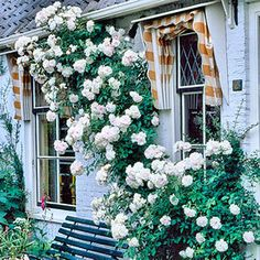 14 awesome tough as nails roses images home garden knockout rh pinterest com