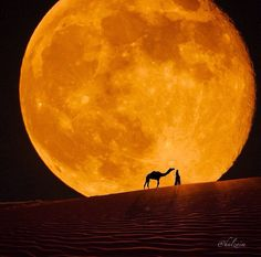 """Only the development of compassion and understanding for others can bring us the tranquility and happiness we all seek.""    ~  H.H. the Dalai Lama  * Desert Moon   <3 lis"