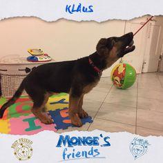 Klaus #Mongesfriends
