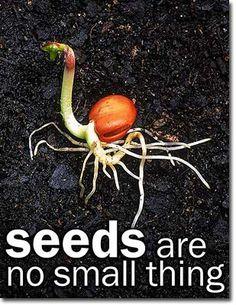 New European Seed Legislation: Winners and Losers