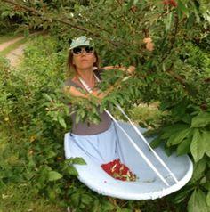 как собирать урожай