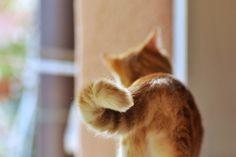O gato possui beleza sem vaidade, força sem insolência, coragem sem ferocidade, todas as virtudes do homem sem seus vícios. -   Lord Byron