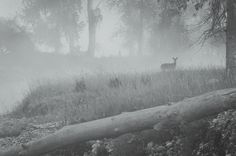 Foggy Bitterroot River Morning! The Thrill Society Galleries offering custom, fine art photography prints made to order at: http://thethrillsociety.com/category/photography-art-galleries/ #bitterroot #bitterrootriver #fog #nature #naturelover #naturephotography