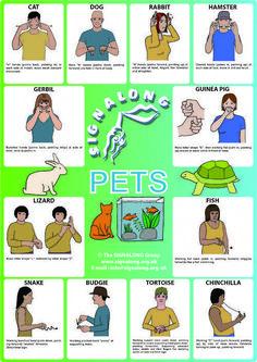 Pets signs - BSL (British Sign Language) #signlanguageposter