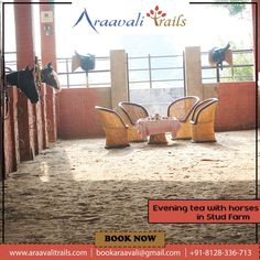 Experience the feeling of having a cup of tea with your friends or family in a stud farm with horses around you. You will spend a quiet evening with good view, tea and snacks, horse ride, etc. Adventure Resort, Stud Farm, Horse Books, Best Resorts, Horse Farms, Horse Riding, Nice View, Trail, Picnic