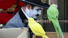 Video about Yellow and green parrots and comedian in background. Video of clip, mice, parrot - 78107113 Parrots, Mice, Comedians, Entertainment, Stock Photos, Abstract, Yellow, Green, Summary