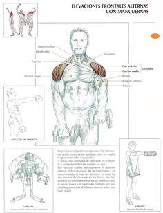biceps y triceps - Buscar con Google