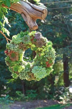 A great garden project. This DIY Living Garden Wreath can be used for many purposes. Looks great in your garden or in your home. #garden #diy #succulents