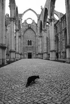 O gato preto - Igreja Do Carmo, Lisbon | Portugal