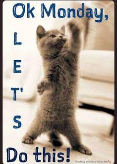 New humor monday work awesome Ideas Thursday Meme, Happy Thursday Quotes, Happy Monday Funny, Happy Friday, 9gag Funny, Funny Cats, Friday Quotes Humor, Monday Memes, Monday Pics