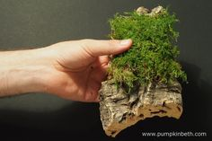 Here's the piece of cork bark with the moss placed over it, ready for the orchid to be mounted on top.