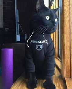 Cat Lover, Neko, Cute Cats, Funny Animals, Kitty, Batcave, Bunker, Window, Metal