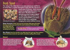 Toxic terrors Card 1 - Killer bee - Back