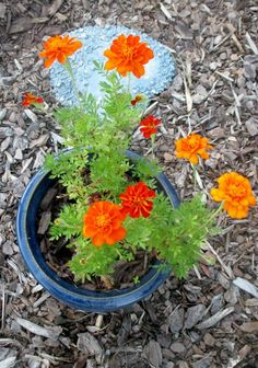 Lazy Gardening: Include plants that pull double duty. Growing plants that yield beauty is great. Growing some plants that yield additional benefits makes gardening more worthwhile...(Richard S. Buse photo)