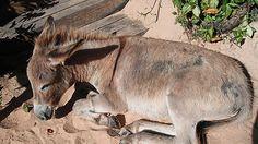 Massacre 2,000 donkeys in Bahia