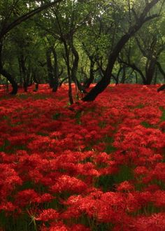 Ode to the World — color-meperfect: red carpet by Sueo takano