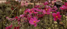 Fleurs au Jardin des Tuileries | Flickr – Condivisione di foto!