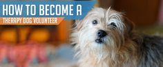 Would your dog be a wonderful therapy dog?  Find out how to become a volunteer. https://www.sitstay.com/blogs/good-dog-blog/211695431?utm_campaign=coschedule&utm_source=pinterest&utm_medium=SitStay%20Dogs&utm_content=How%20to%20become%20a%20Therapy%20Dog%20Volunteer