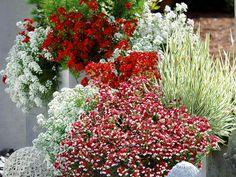 Pflanzen in rot und weiß für Balkon und Terrasse