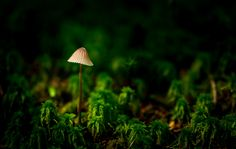 Forest beauty by Paulius Bruzdeilynas on 500px