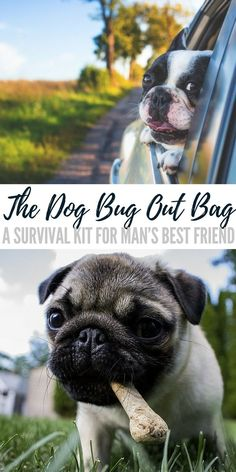 The Dog Bug Out Bag – A Survival Kit for Man's Best Friend - Every dog has its day, and you may want yours to have a few more! Plan for your dog to survive a disaster now so you don't have to leave them behind when SHTF.