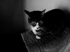Gato en sombras. Mi Moris