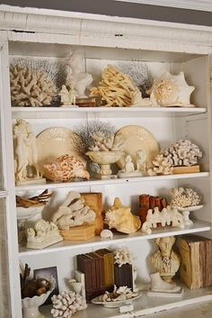 Decorating Inspiration: Displaying Collections in Your Home These beautiful bookcases are filled with shells and coral intermingled with books and other decorative items: Vitrine Pour Collection, Shell Collection, Nature Collection, Rock Collection, Collection Displays, Seashell Display, Seashell Art, Display Sea Shells, Sea Shells Decor