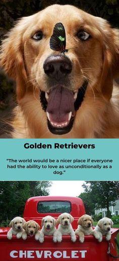 golden retrievers are magical Golden Retrievers, Dog Breeds, Cute Dogs, Cute Animals, Puppies, Babies, Pets, Friends, Funny