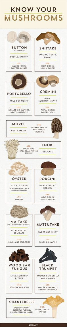 It's time to get your fungus knowledge down with this mushro.-It's time to get your fungus knowledge down with this mushroom infographic It's time to get your fungus knowledge down with this mushroom infographic - Mushroom Recipes, Vegetable Recipes, Vegetarian Recipes, Cooking Recipes, Healthy Recipes, Mushroom Guide, Healthy Tips, Cooking 101, Cooking Hacks