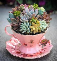 Charming Succulent Indoor Garden Ideas 2019 - Page 44 of 64 - SooPush - Garten - Cactus Colorful Succulents, Succulents In Containers, Cacti And Succulents, Planting Succulents, Cactus Plants, Propagate Succulents, Cactus Art, Nature Plants, Flowers Nature