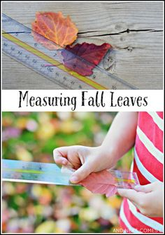 Explore math outdoors in fall with this simple measuring fall leaves activity for kids from And Next Comes L