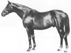 Nearco, a great undefeated champion on the track and possibly the most important sire of the twentieth century - Tapit's  eighth sire. Nearco was a son of Pharos and the mare Nogara, a daughter of Havresac II