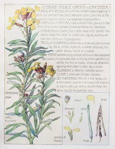 1000+ images about Botanical on Pinterest | Western wild, Botanical prints and Botany