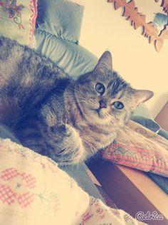 EMMY - vedette de notre CONCOURS Photo mensuel chat, chien, animaux. participez ici >> http://www.verlina.com/concours-photo.php