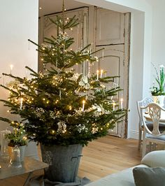 Small trees in pails/pots around the house decorated differently