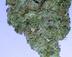 Jack Haze - Jack Herer x Super Silver Haze - wow it's an all haze taste/smell party - very energizing