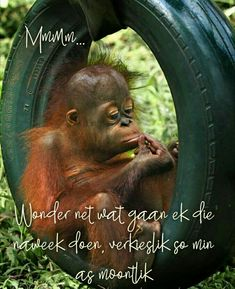 Friday Weekend, Happy Weekend, Tired Quotes, Qoutes, Funny Quotes, Afrikaanse Quotes, Goeie Nag, Goeie More, Weekend Quotes